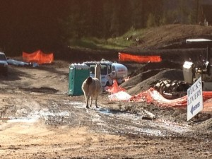 "Being that the jobsite is up by Durango Mountain Resort we sometimes get ""out-of-town"" visitors."